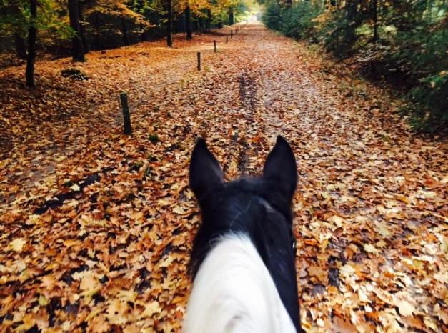 Buitenrit-te-paard-30-10-2015-2